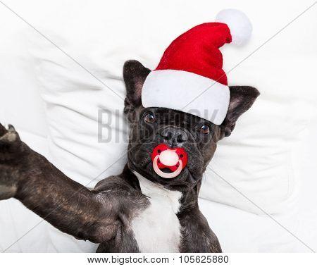 Santa Claus Selfie Dog