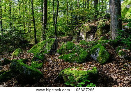 Beautiful Turf Covered Stones With Green Moss In Magic Forest