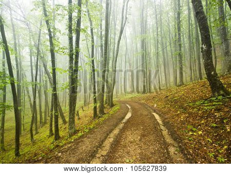 foggy forest with dirt road