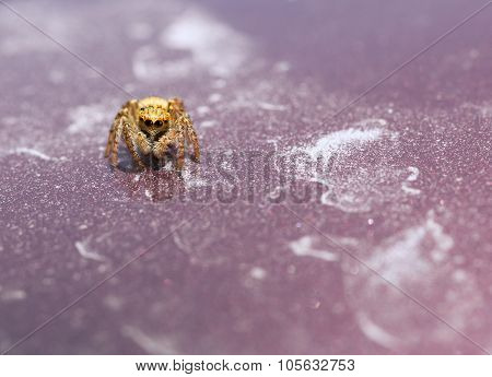 Macro Of Tiny Spider