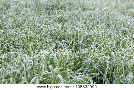 Frozen Cereal Field Background In Winter