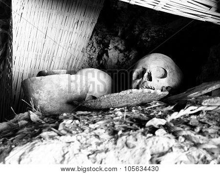 Human skull in the grave