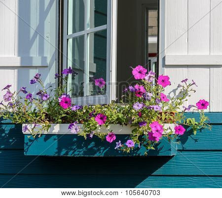 White Window Decorated With Petunia Flower Box