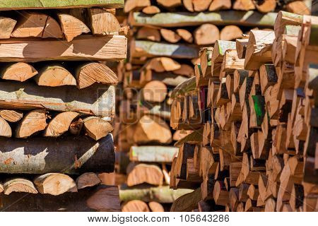trees in a forest have been recut at woodwork. natural, energy-friendly and sustainable heat.