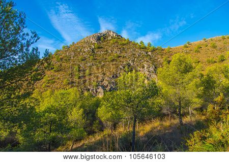 Mountain forest landscape, Spain.