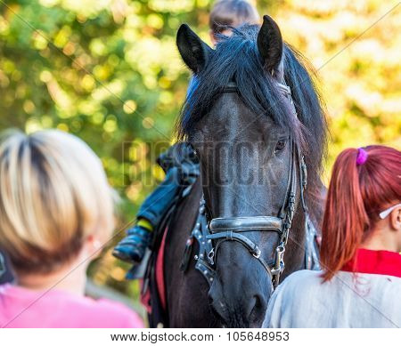 Horse among people.