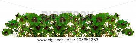 Green clover leafs border .