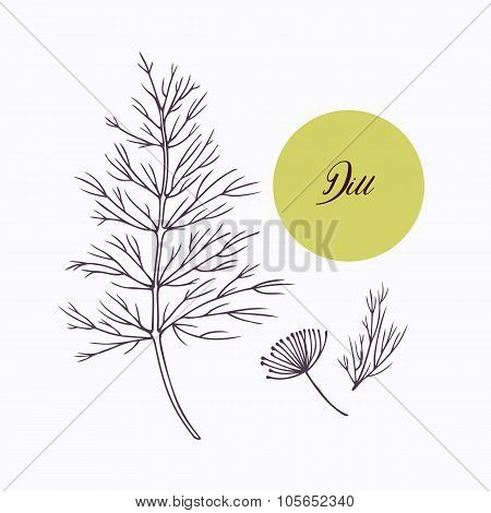 Hand drawn dill branch with leves isolated on white