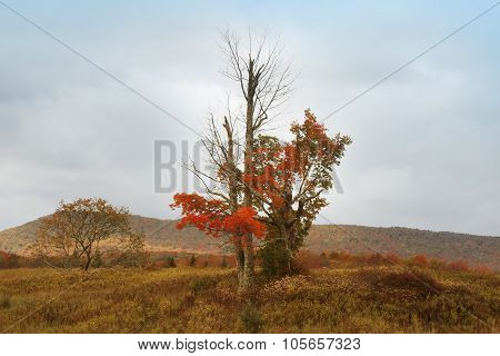 Dolly Sods Landscape