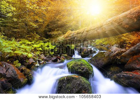Autumnal forest with mountain creek