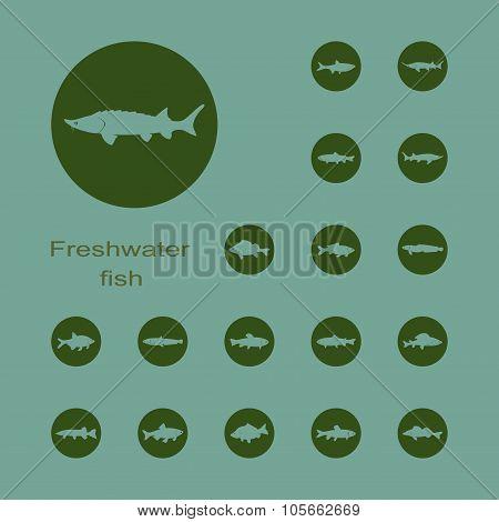 freshwater fish plain set of icons