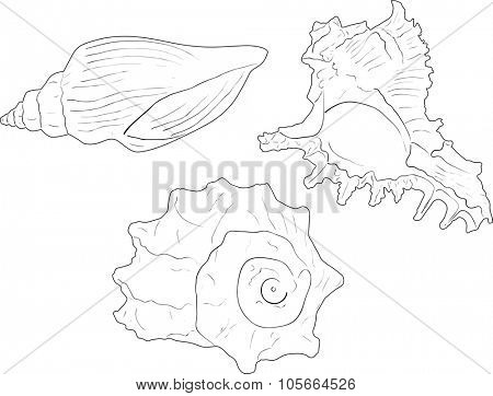 illustration with three black shellfishes sketches isolated on white background