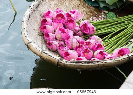 A boat of lotus flower in West Lake, Hanoi, Vietnam.