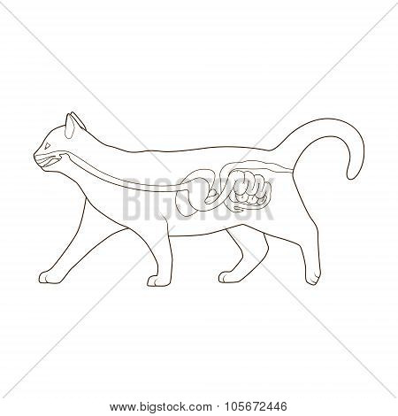 Digestive system of the cat vector illustration