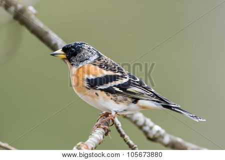 Mr Brambling's Profile
