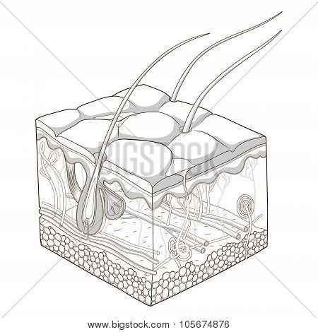 Skin structure vector illustration