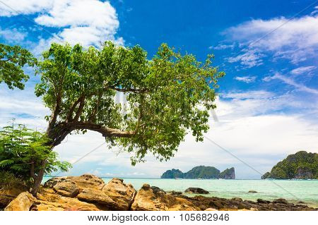 Idyllic Coast Branches Overhanging