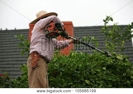 An unidentifiable gardener trims bushes and trees in a yard outside.
