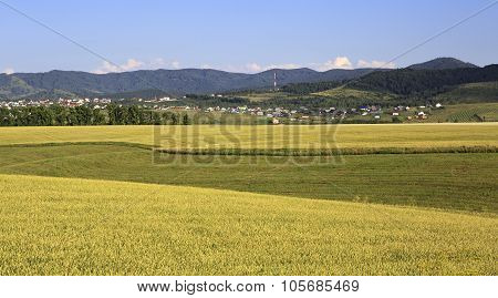 Agricultural fields and the town of Belokurikha.