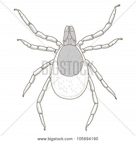 tick mite insect vector illustration