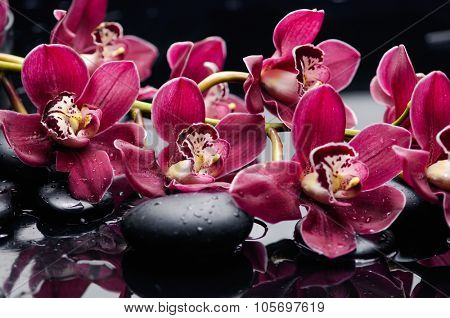 Set of branch red orchid with therapy stones