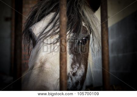 Horse Behind Bars
