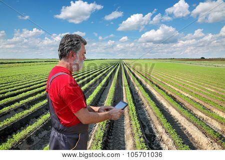 Farmer Inspect Carrot Field