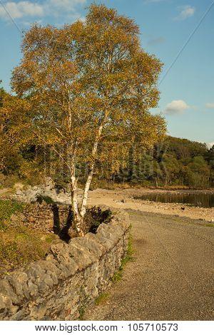 Colourful and contrast Autumn scene