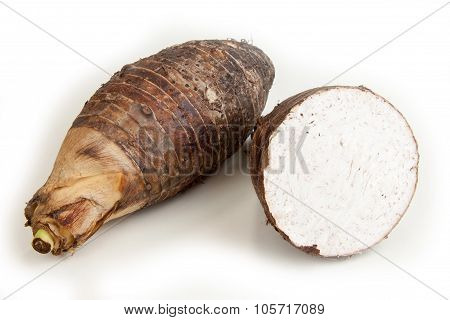 Head Two Taro Split