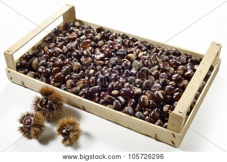 Box Chestnuts And Urchins