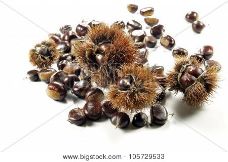 Chestnuts And Urchins On White Plane
