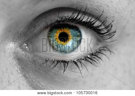 Eye Looks To Viewer Concept Macro