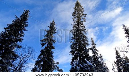 Wood under the snow in a winter landscape