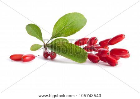 Ripe Barberries  Isolated On White Background