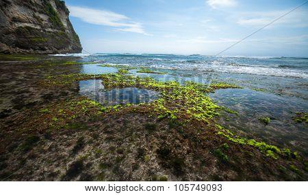 Sea coast during low tide