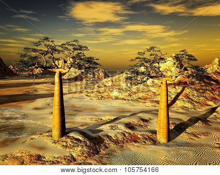 Rocky desert with two trees- baobab