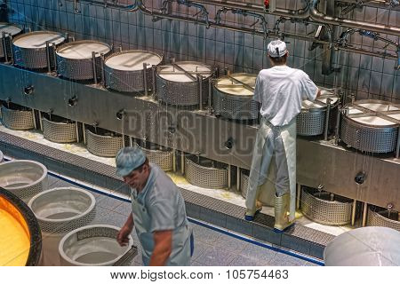Worker Of The Cheese-making Factory Fixing The Pressure Plate On A Cheese Press
