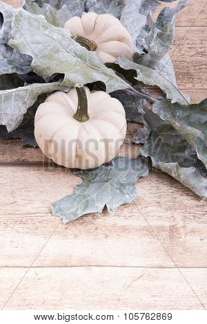 White Pumkin And Leafs With Space For Own Text