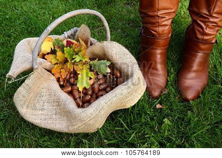 Basket Of Acorns And Oak Leaves Next To Brown Boots