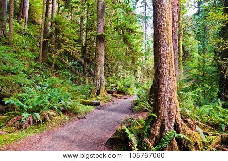 Path To Marymere Falls
