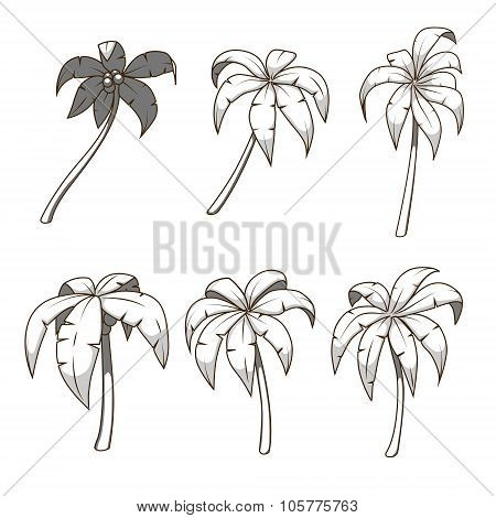 Palm tree set colorless vector illustration