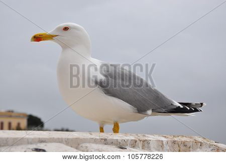 Seagull in inclement weather