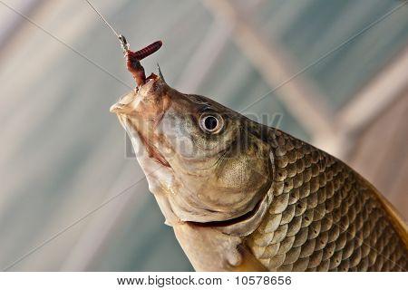 Hook Karausche