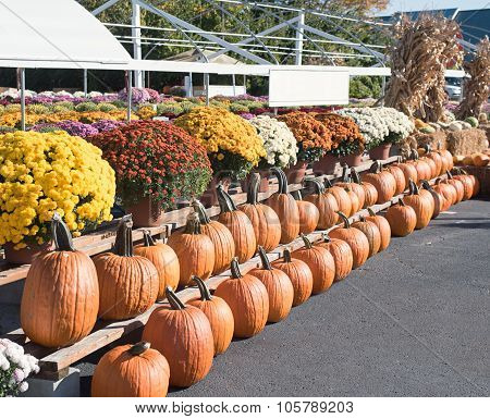 Fall Pumpkin and Mum Display