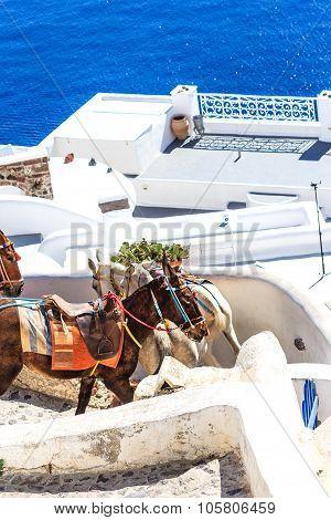 Donkeys on the steep narrow streets of Santorini (Oia), Greece