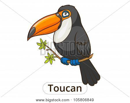Toucan bird cartoon vector illustration