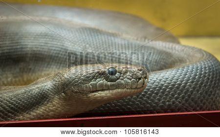 Python in the terrarium