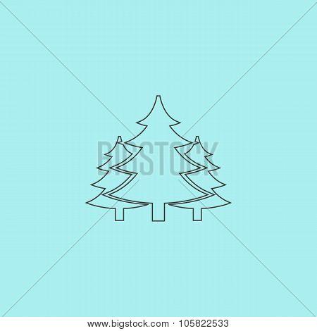 Tree, Christmas fir tree