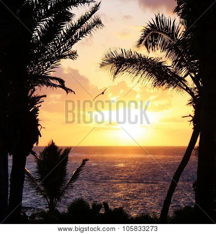 palm trees silhouette on sunset tropical beach holiday scene