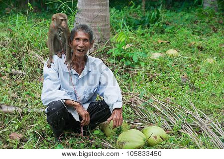 Farmer with monkey the coconut plantation at Kog Samui, Thailand.